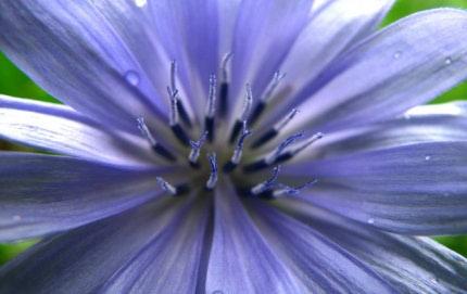 Rješenje iz prirode - biljka kao lijek