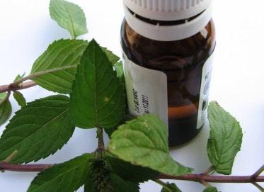 Paprena metvica: eterično ulje prve pomoći