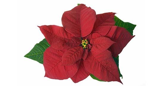 Zadržite božićne zvijezde i nakon Božića