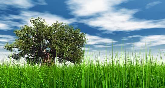 Dodijeljena godišnja nagrada Greenovation