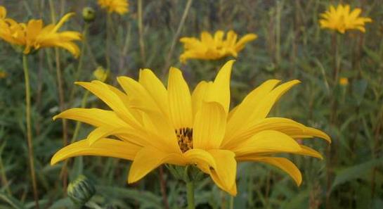 Vrtlarski bunt - nek' raste cvijeće