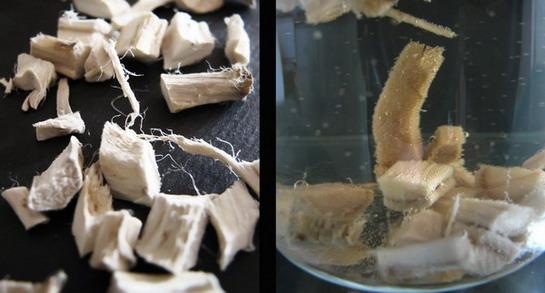Kako pripremiti korijen bijelog sljeza?