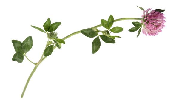 Menopauza i ljekovito bilje – ruku pod ruku
