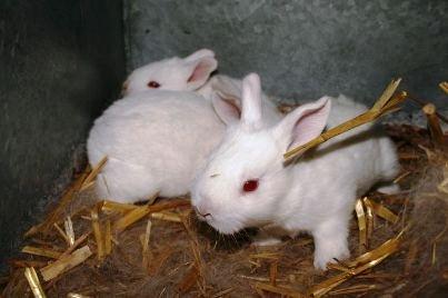 Pobjeda razuma: EU zabranjuje testiranje kozmetike na životinjama!
