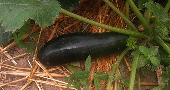 Što me naučilo vrtlarenje?