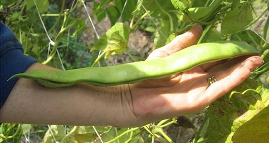 Priroda i permakultura - optimum i maksimum