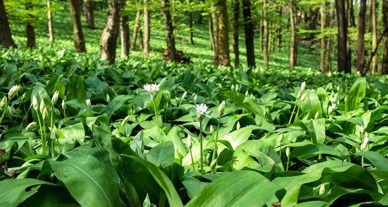 RAMSLIN biljne kapi – zdravo, prirodno i ekološki