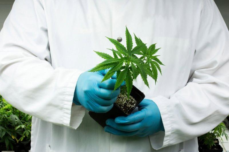 Upotreba marihuane uskoro legalna za maligne bolesti, multiplu sklerozu, AIDS i epilepsiju