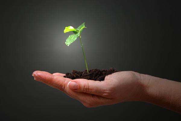 Permakultura - održivi vrt, zbrinuta zemlja, sretni ljudi