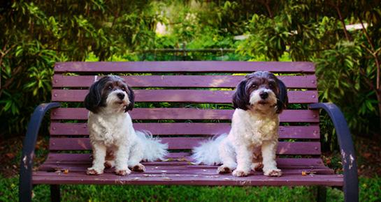 Psi se ne smiju kažnjavati!