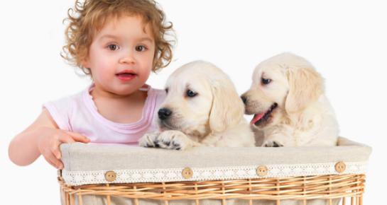 Kako pripremiti psa na dolazak bebe