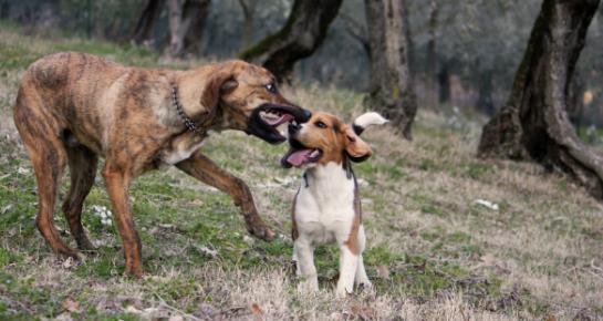 Igra je važan element odgoja pasa