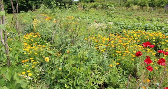 Najčešće bolesti i nametnici u vrtu - samo bez panike
