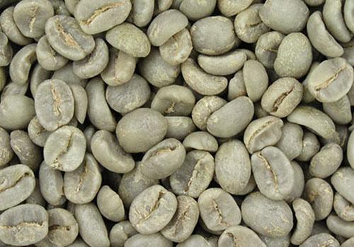 Klorogenična kiselina iz zelene kave - pomoć u mršavljenju?