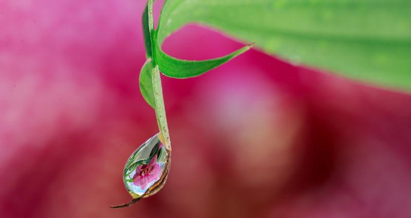 Hidrolati - 'svete vodice' aromaterapije