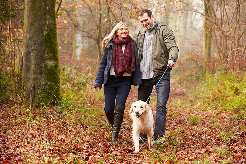 Pas u šetnji: Floki mora njuškati