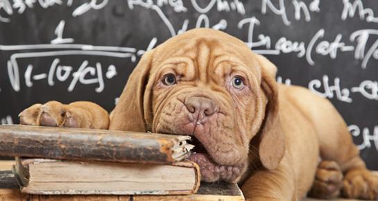 Kako naučiti psa da vani obavlja nuždu