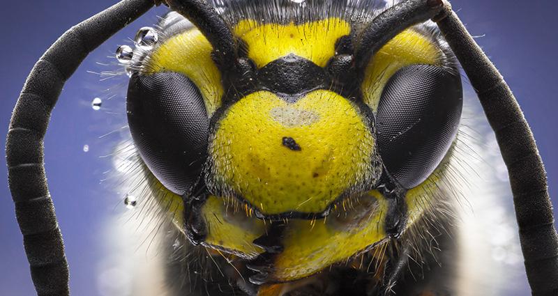 Eterična ulja pomažu kod uboda komaraca, pčele,
