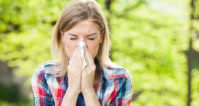 Šalica čaja - alergija na ambroziju