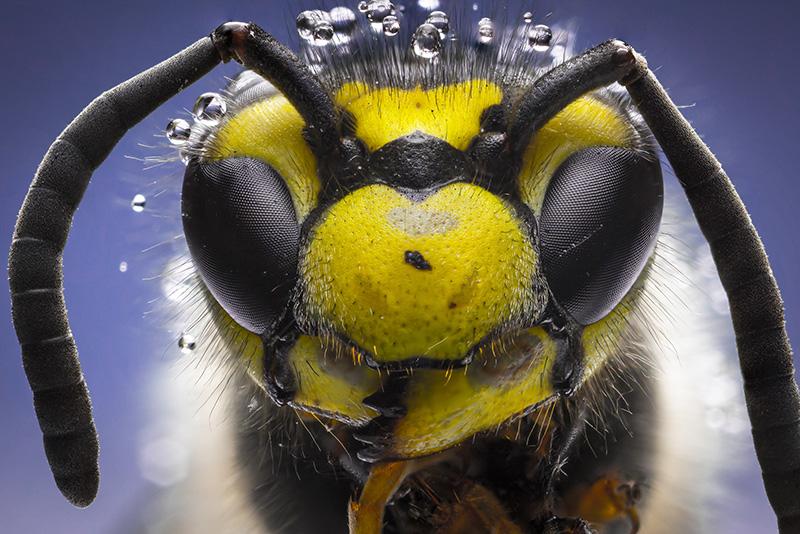 Eterična ulja pomažu kod uboda komaraca, pčele, ose i krpelja...