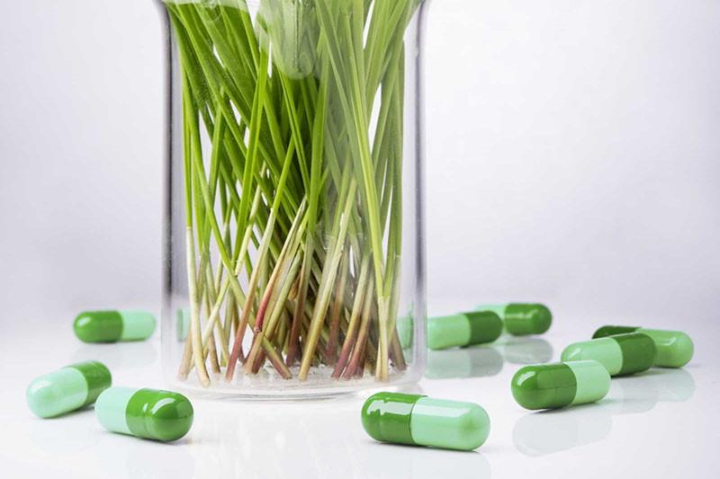 Biljni lijekovi koji su promijenili svijet