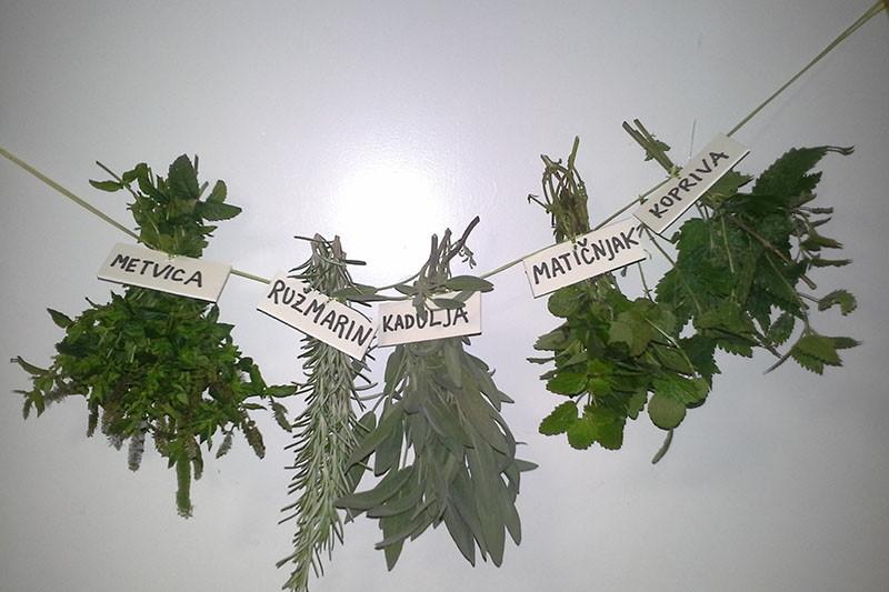 Tri travke - tradicionalni lijek i spas za ubode insekata