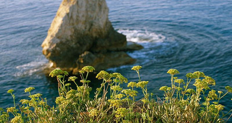 Jod i zdravlje štitnjače: Zašto je naš motar bolji od kelp alge?