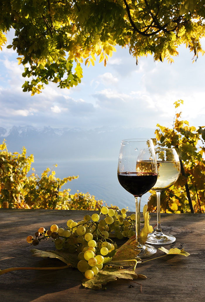 Vino ne može škoditi (onome tko ga zna piti)