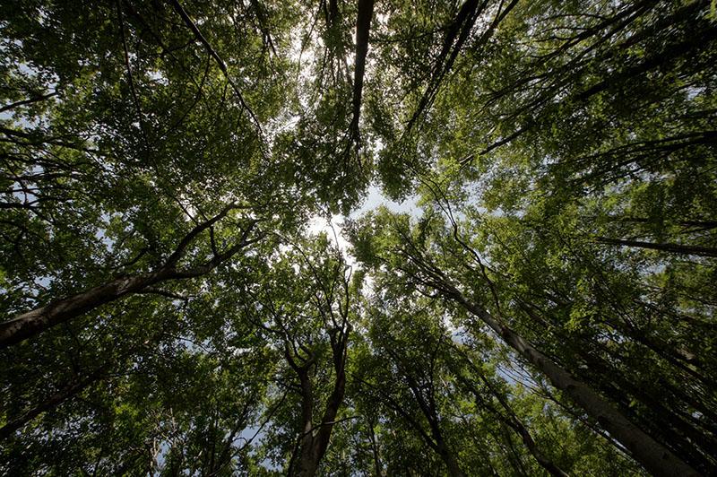 Nek' se zeleni: Što ti možeš učiniti za zaštitu šuma?