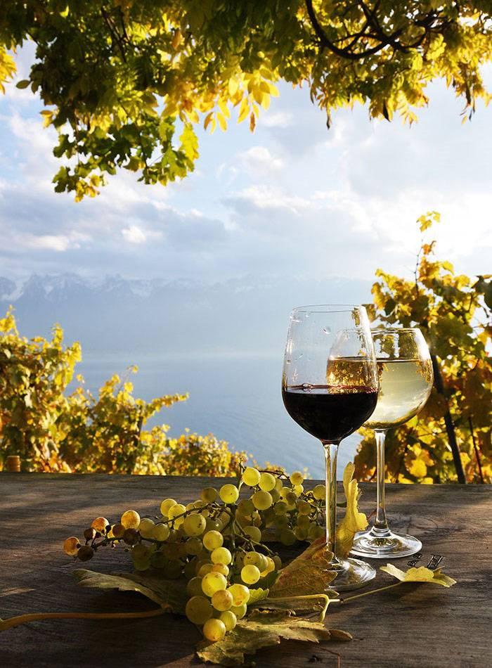 Svi okusi Istre - jedinstvene gastro i enološke destinacije