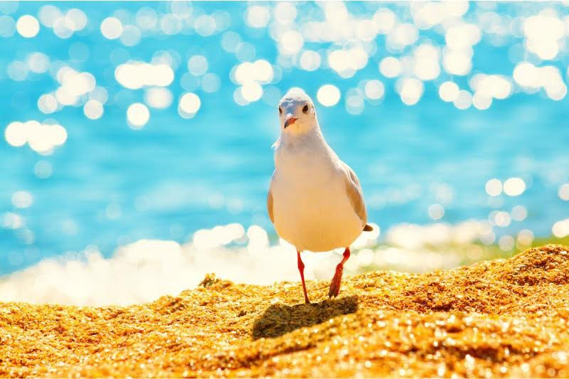 Povratak sebi za mir u duši - napravi prvi korak svog duhovnog putovanja