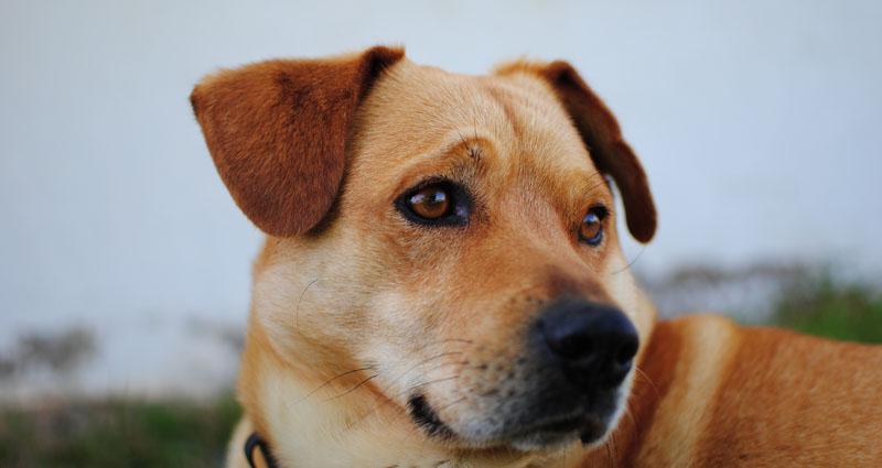 Uz ove pripravke možeš zaštititi svog psa od krpelja i buha