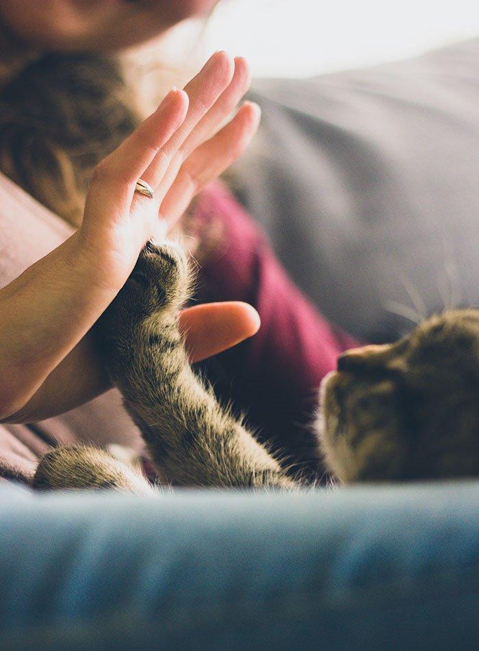 Zdravstvene prednosti kućnih ljubimaca kojih niste ni svjesni