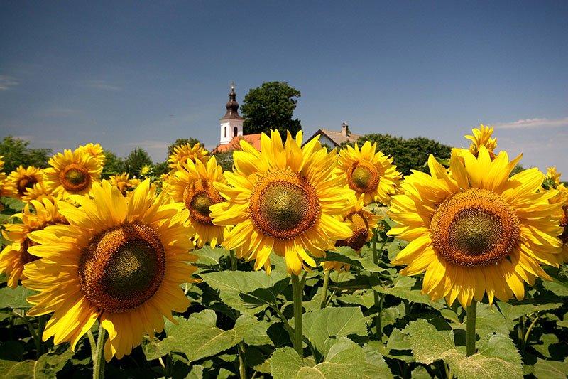 Ovog proljeća otkrijte sve ljepote Vojvodine