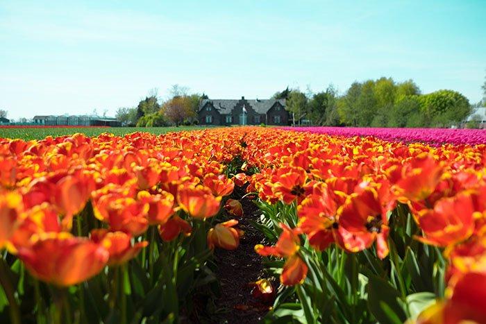 Ovo su destinacije koje definitivno morate posjetiti u proljeće