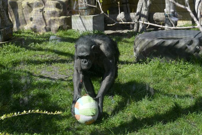 Zekanje u Zoo vrtu na Uskrsni ponedjeljak postalo zagrebački običaj