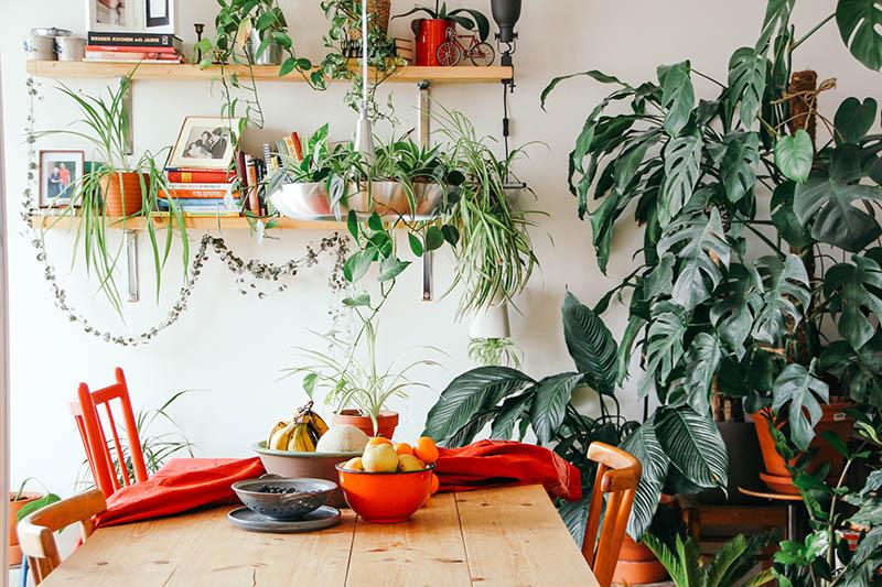 15 ideja kako u svoj dom ubaciti što više biljaka