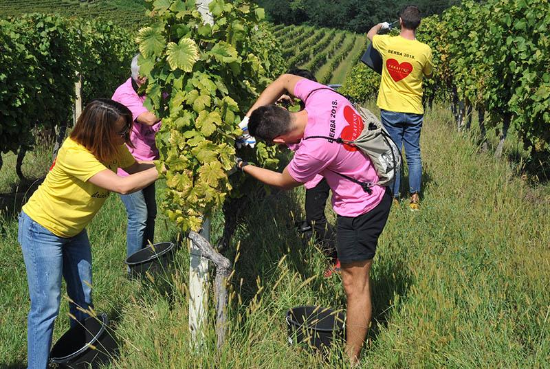 Novi pjenušci Feravina obilježili početak berbe grožđa