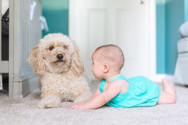 Za prevenciju astme kod djeteta, nabavite mu kućnog ljubimca
