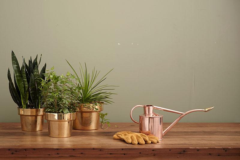 TOP 5 biljaka koje čiste zrak, a gotovo ih je nemoguće ubiti