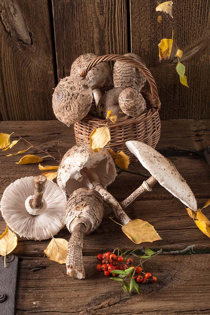 Vrganji, sunčanice, lisičarke: Neodoljivi jesenski recepti s gljivama