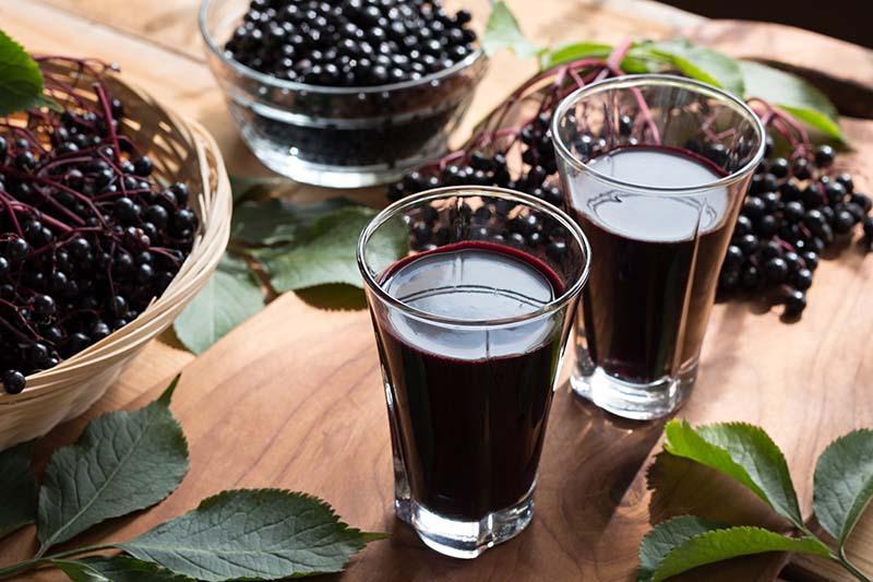 Može li crna bazga pomoći u liječenju prehlade i gripe? Evo što kažu istraživanja