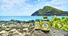 Havajska spirulina: Nutritivna bomba koja brine o