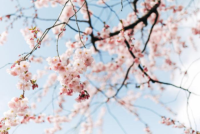 Proljetna detoksikacija: Vrijeme je za generalku!