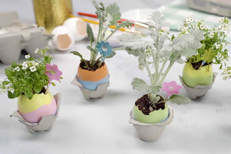 VIDEO: Kad ljuska od jajeta postane mini tegla za cvijeće