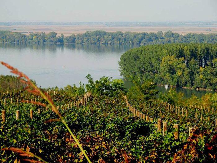 Grocka: vinorodni kraj nadomak Beograda koji je oduševio Sophiju Loren i Neila Armstronga
