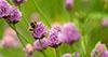 Što ti možeš učiniti za spas pčela?