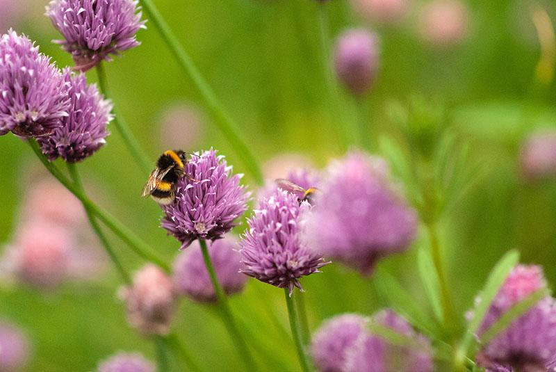 Što ti možeš učiniti za spas pčela? Stiže 5 praktičnih savjeta