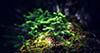 Sadnja šuma mogla bi značajno usporiti klimatske