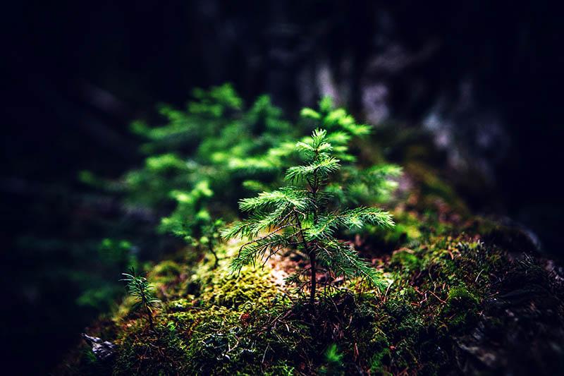 Sadnja šuma mogla bi značajno usporiti klimatske promjene, kažu znanstvenici